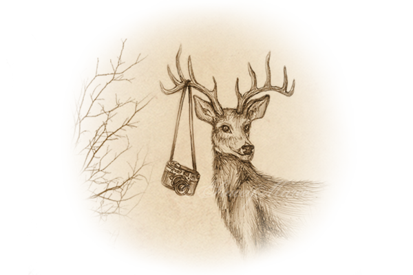 circlebanner-deer4
