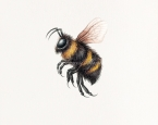 'Bee'