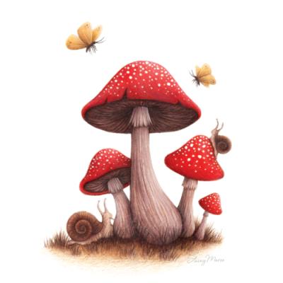 Toadstool Mushrooms Stacey Maree