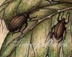 'Pumpkin Bettles' - Fungi and Invertebrate studies