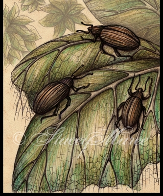 'Pumpkin Bettles' - Fungi and Invertebrate. Stacey Maree
