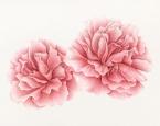 'Pink Peonies'