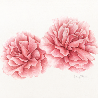 'Pink Peonies' Stacey Maree