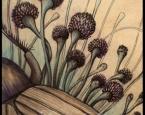 'Spores' - Fungi and Invertebrate studies