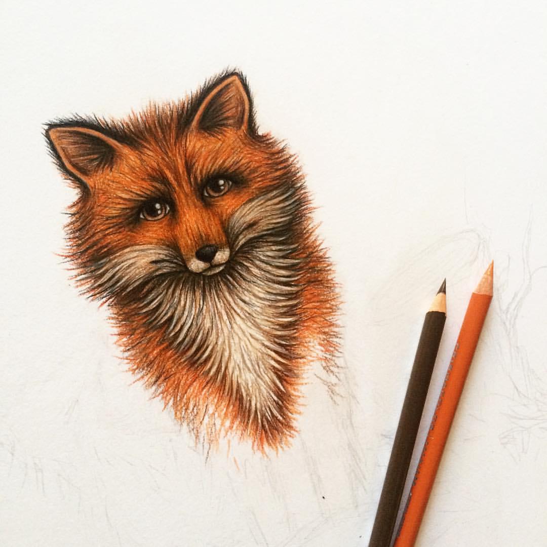 fox and fungi