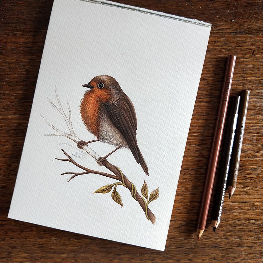 stacey maree - robin illustration